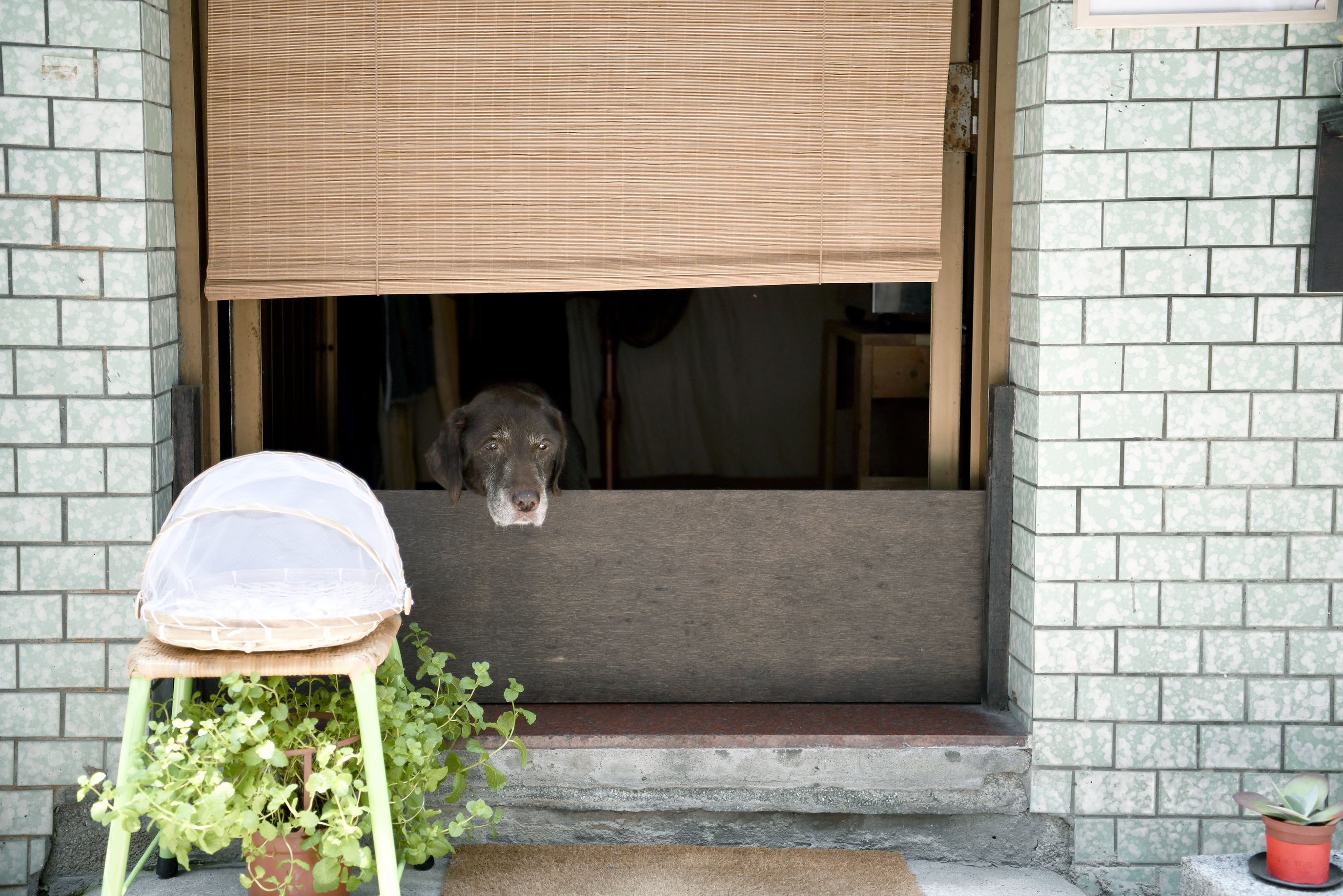 台北 菜菜朝食|苓苓與拉拉的迷你早餐店,我們一人一邊守護日子的窗口。