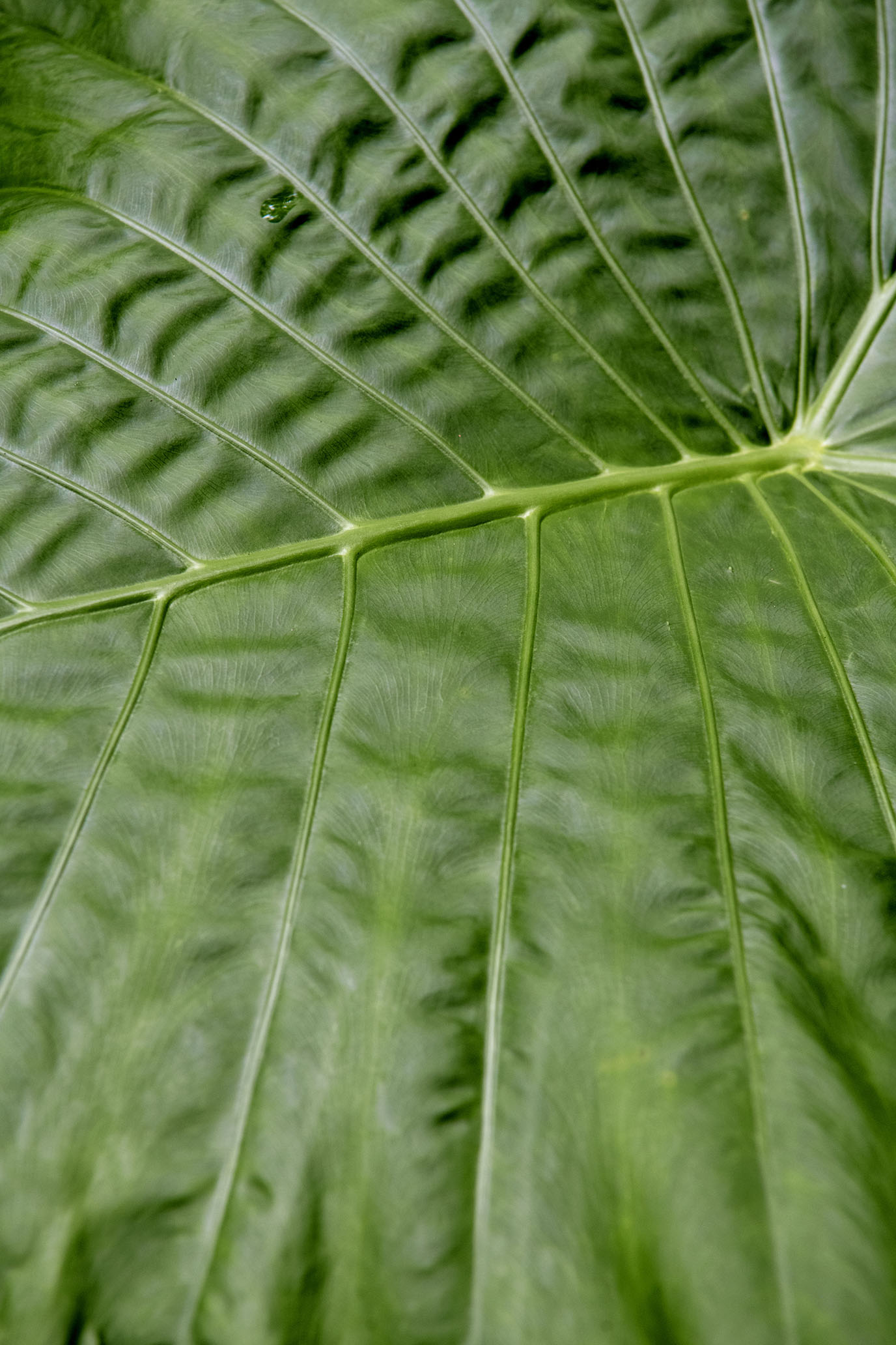 友善地球的生活方式,從淨山養樹開始|艾瑪絲Aromase
