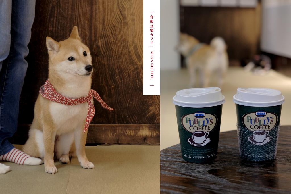 【男子日本旅行】豆柴咖啡廳,倉敷旅行中,30分鐘最療癒的陪伴。豆柴カフェ @MENS 30S LIFE